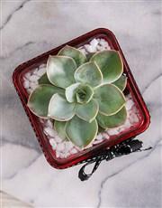 Mini Succulent Vase