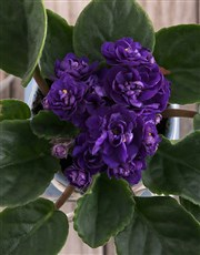 African Violet with Wooden Love Cutout