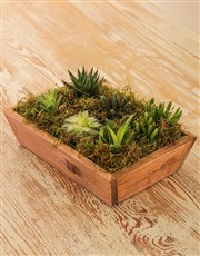 A wooden tray filled with succulents all tied toge
