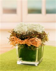 Carnations in a Petite Glass Vase