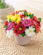 We've created this colourful arrangement of mixed