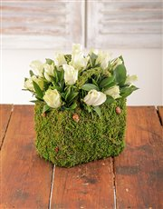 Cream Roses in a Moss Basket