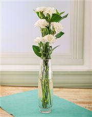 Simply Six White Carnations