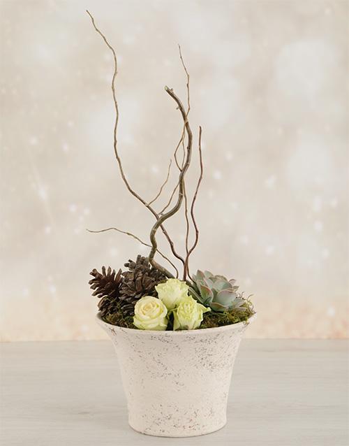 succulents: Rose & Succulent Pot!