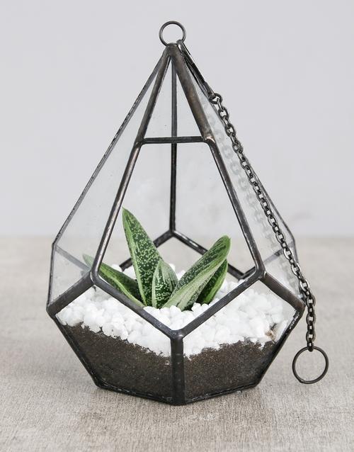 birthday: Succulent in Looped Vase   White Stones!