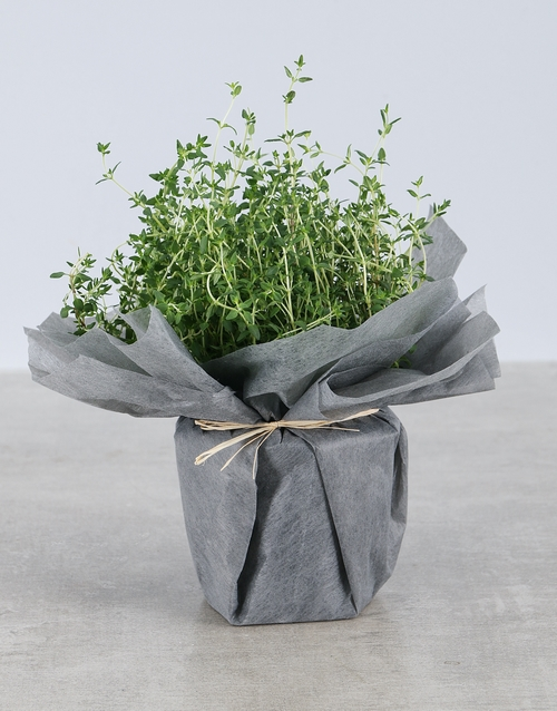 birthday: Thyme Herbs in Wrapping!