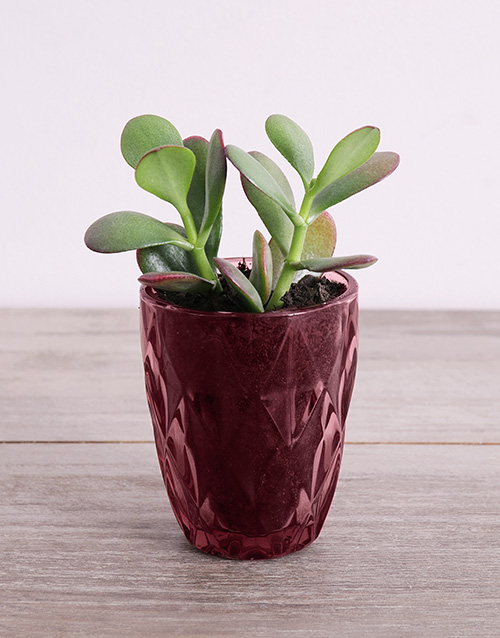 succulents: Desert Arrangement in Plum Votive!