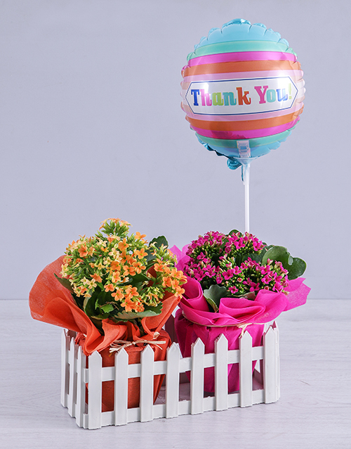 secretarys-day: Kalanchoe Plants and Thank You Balloon in Fence!