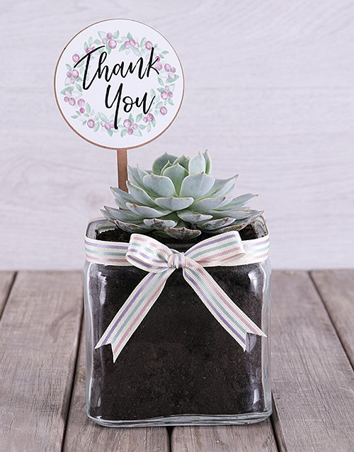 succulents: Thank You Succulent in Square Vase!