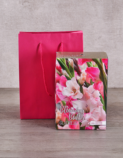 bosses-day: Gladiolus Bulbs in Cerise Bag!