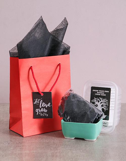 bonsai: Let Love Grow Bonsai Kit!
