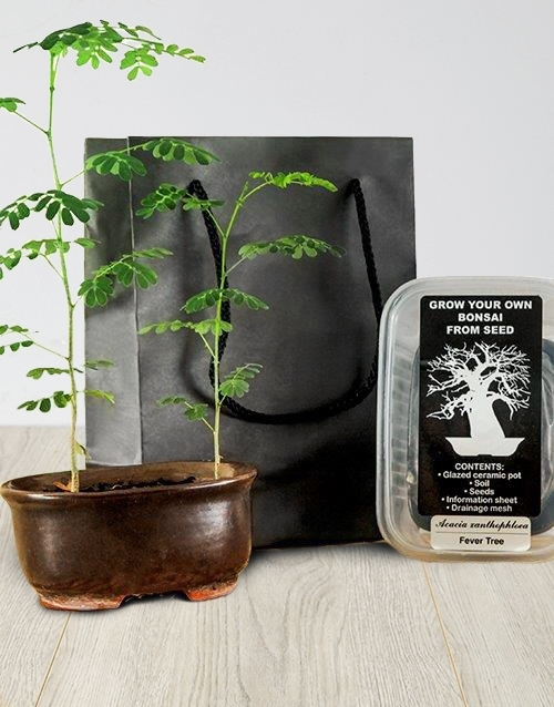 bonsai: Grow Your Own Bonsai!