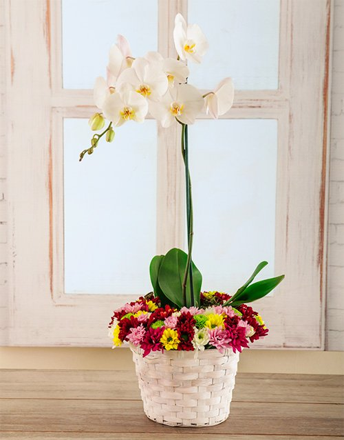 orchids: Bright and Beautiful Basket of Love!