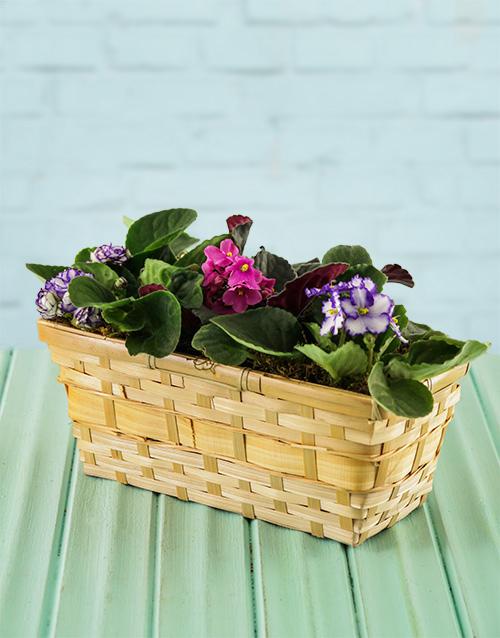 easter: African Violets in a Basket!