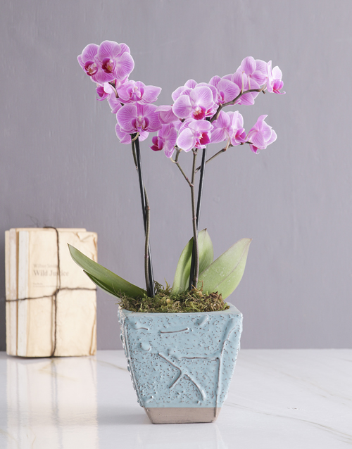 secretarys-day: Orchid in Blue!