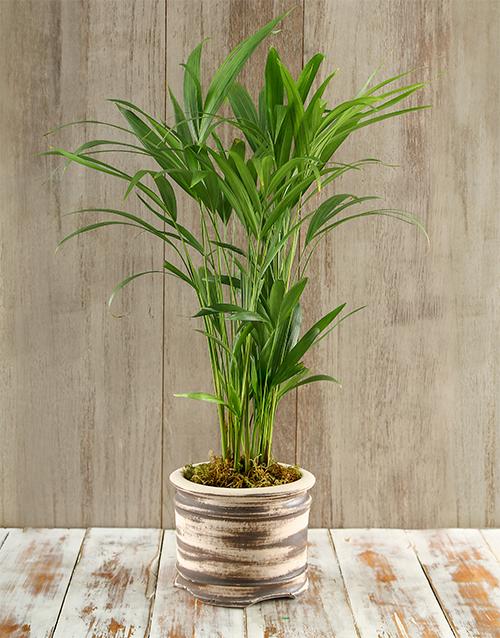 pottery: Exotic Areca Bamboo planter!