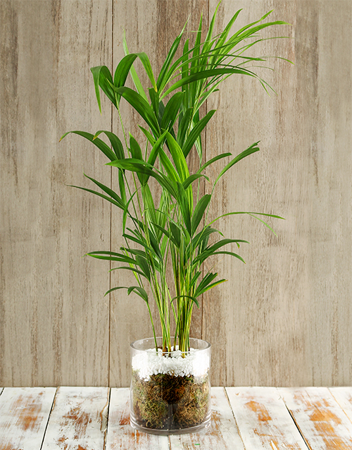 birthday: Rain Forest Delight Bamboo Plant!