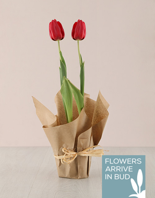 tulips: Red Tulip Plant in Craft Paper!