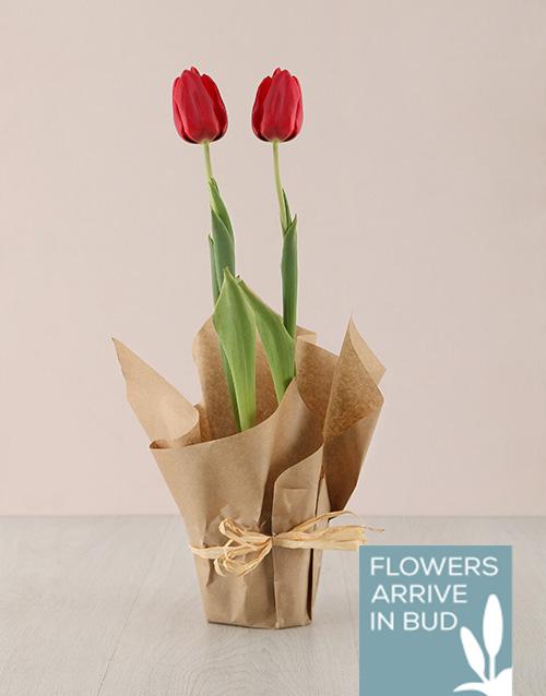 flowering: Red Tulip Plant in Craft Paper!