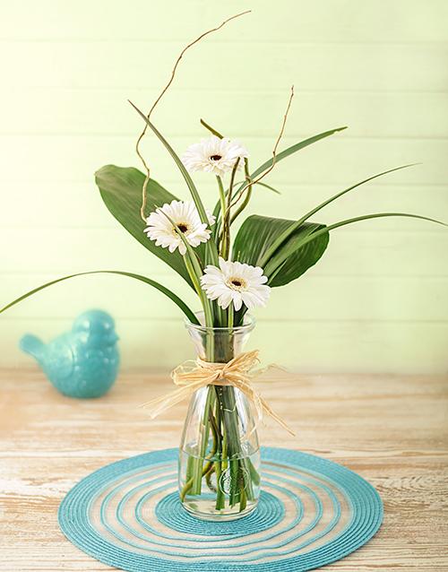 colour: Petite Stepped White Gerbera Gift!