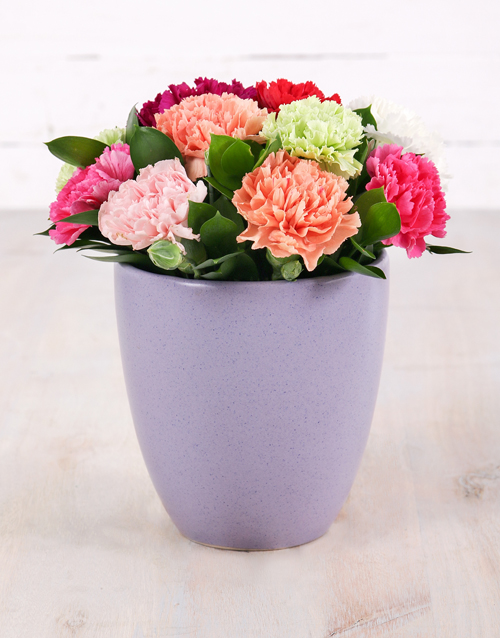 carnation: Mixed Carnations in Purple Glazed Pot!