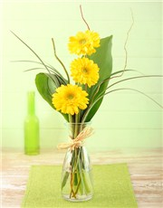 Picture of Stepped Yellow Gerbera Arrangement Petite!
