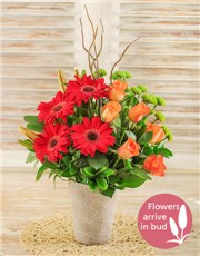 Picture of Lily Gerbera and Rose Floral Display!