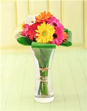 Picture of Gerberas in a Vase!