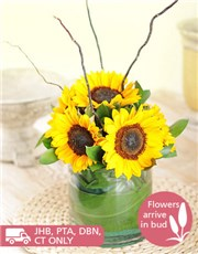 Picture of Cylinder Vase of Sunflowers!