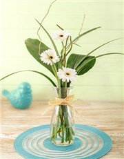 Picture of Stepped White Gerbera Arrangement Petite!