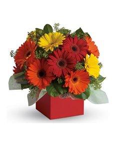 flowers: Glorious Gerberas Arrangement!