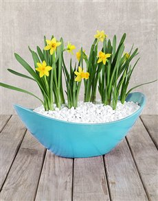 flowers: Daffodil in a Boat!
