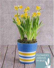 flowers: Bright Sunny Pot!