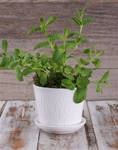 gifts: Potted Mint Herbs!