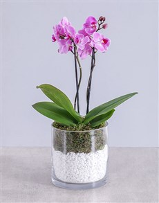flowers: Pink Bold Orchid!