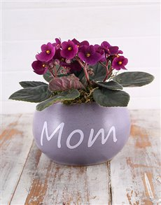 gifts: Mom Pot with Violet Plant!