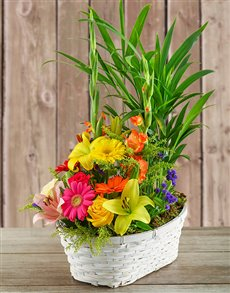 flowers: Plant with Flower Arrangement in a Basket!