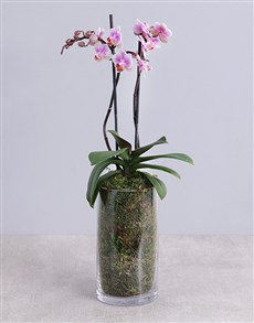 flowers: Phalaenopsis Orchid in Glass Vase!
