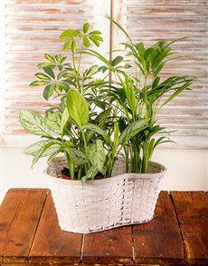 plants: Trio of Green Plants in a Basket!