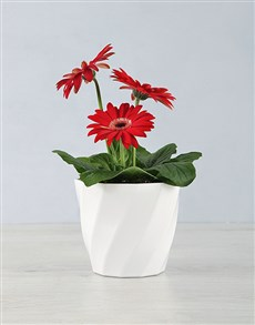 flowers: Mini Gerbera Planter in a Planter Pot!