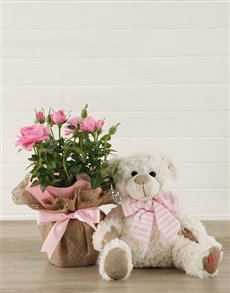 gifts: It's a Girl Teddy and Pink Rose Bush!