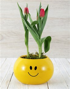 flowers: Red Tulip Plant in Smiley Pot!