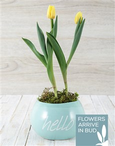flowers: Hello Spring Tulip Pot!