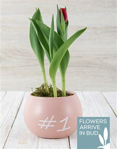 plants: Yellow Tulip Plant in Smiley Pot!