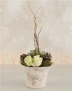 gifts: Rose & Succulent Pot!