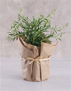 flowers: Rosemary Plant in Brown Paper!