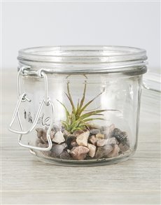 flowers: Ionantha Fuego Air Plant in Pink Stones Mini Jar!