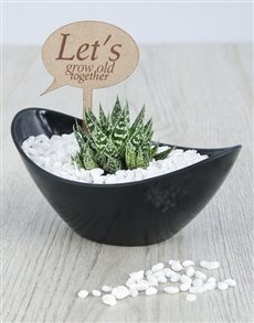 gifts: Lets Grow Old Succulent!