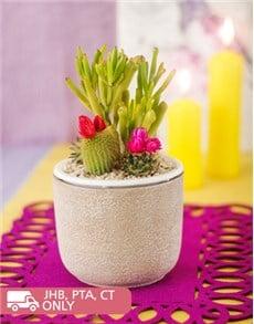 plants: Garden Cacti in Pottery Vase!