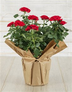 plants: Red Rose Bush in Craft Paper !